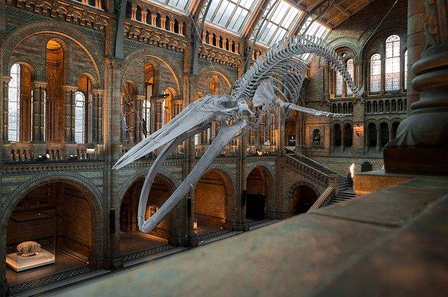Skeleton in British National History Museum
